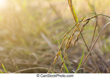 Fresh rice with green leaves background close up