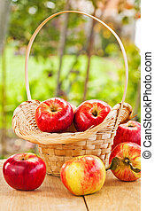 fresh ripe apples in basket and table in garden