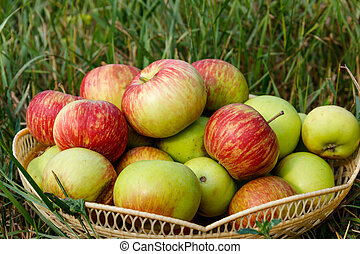 Fresh ripe apples in basket on the green grass