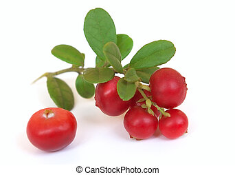 Fresh ripe cranberry with leaves