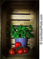 Fresh ripe garden tomatoes and basil on wooden background