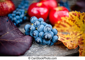 fresh ripe grapes at autumn harvest