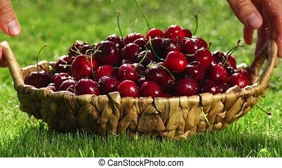 Fresh, ripe, juicy cherries rotate. Red cherry clockwise -...