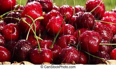 Fresh, ripe, juicy cherries rotate. Red cherry clockwise...