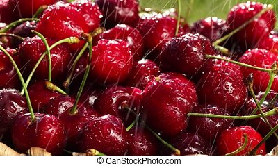 Fresh, ripe, juicy cherries rotate. Red cherry clockwise...