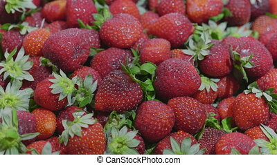 Fresh ripe juicy strawberries Close up. HD stock footage.