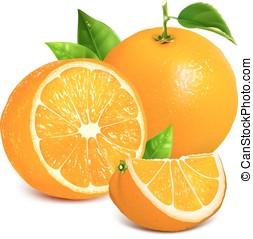 Fresh ripe oranges - Vector illustration of fresh ripe...