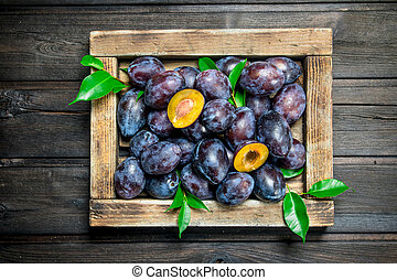 Fresh ripe plum with leaves on tray.