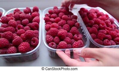 Fresh ripe raspberries in woman hands, white background.