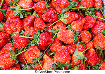 Fresh ripe red strawberries wallpaper.