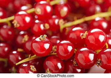 fresh ripe redcurrant background