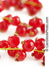 fresh ripe redcurrant isolated on white background