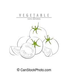 fresh ripe tomatoes illustration