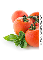 Fresh ripe tomatoes, isolated on white background