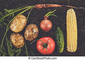 fresh ripe vegetables on the soil - fresh ripe vegetables...