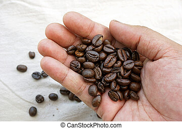Fresh roasted coffee beans in hand