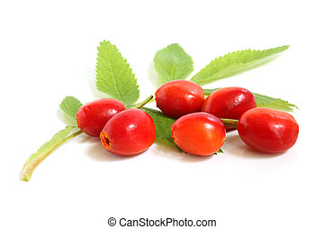 Fresh rose hips with leaves on a white background