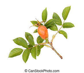 Fresh rose hips with leaves (Rosa canina), isolated on white background, close-up.