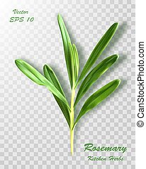 Fresh rosemary bunch isolated on transparent background