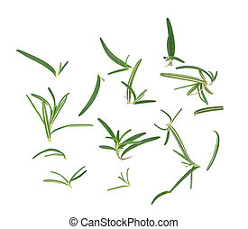 fresh rosemary isolated on white background, top view