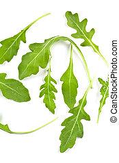 fresh rucola leaves isolated on white background