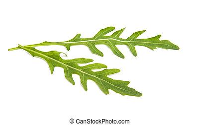 fresh rucola leaves