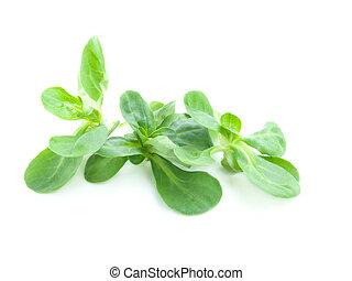 fresh salad isolated on the white background