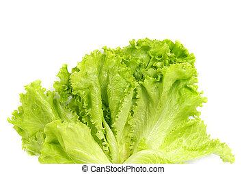 Fresh salad lettuce isolated on white background