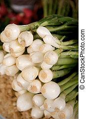 fresh Scallions on a farmers market stall