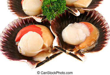 Freshly harvested sea scallops in their shells ready to serve.