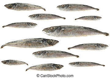 sardines - fresh school of isolated sardines and stickleback...