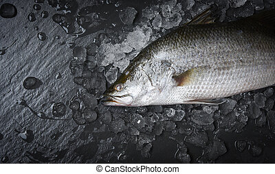 Fresh sea bass fish for cooking / Raw seabass on ice ocean gourmeton