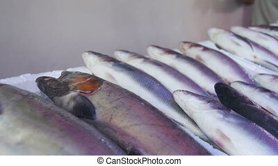 Fresh Sea Fish in Ice on the Counter Market
