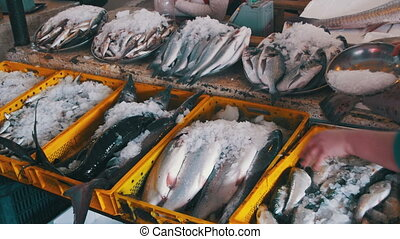 Fresh Sea Fish in Ice on the Counter Market. Seafood market....