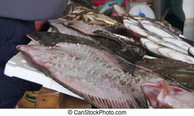 Fresh Sea Fish on The Counter Market. Seafood market. Fish...