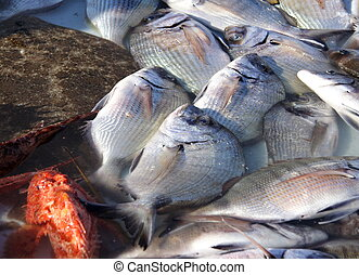 Fresh Sea Food - Fresh Mediteranean Sea Food