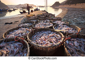 fishery harbor in morning - fresh seafood from the fishery ...