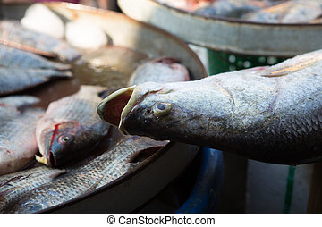 fresh seafood on the market in Thailand