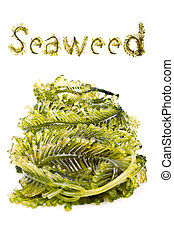 Fresh seaweed from the andaman sea - Seaweed is a loose...
