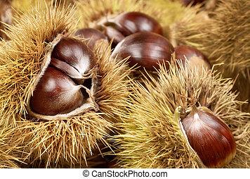Fresh shiny chestnuts with open husk, studio shot