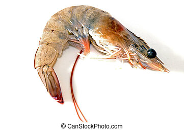 Fresh Shrimp - Shrimp recently fish