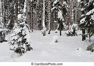 Fresh snow in winter forest