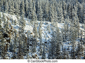 Fresh Snowfall in Mountain Landscape