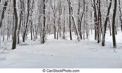 Fresh snow covers the ground and coats trees to create a pristine and peaceful winterscape in this Ukrainian forest. 4k Ultra HD video