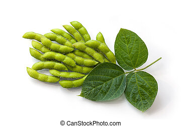 Fresh Soy Beans - Fresh soy beans in the pods with leaves