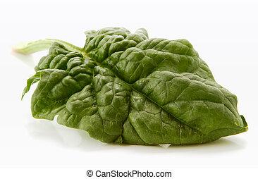 spinach leaf - fresh spinach leaf over white background