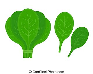 Fresh spinach leaves - Bunch of spinach with two isolated...