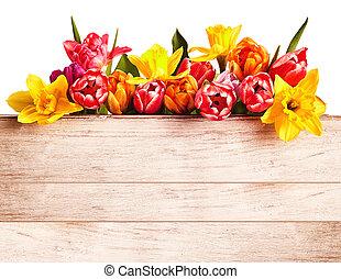Fresh spring flowers forming a seasonal border