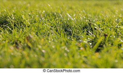 Fresh spring grass in sunlight