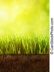 Fresh spring grass with dew against a blue sky